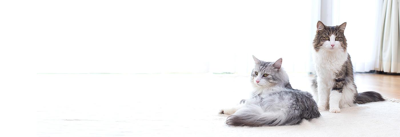 猫 ゴミ箱 対策